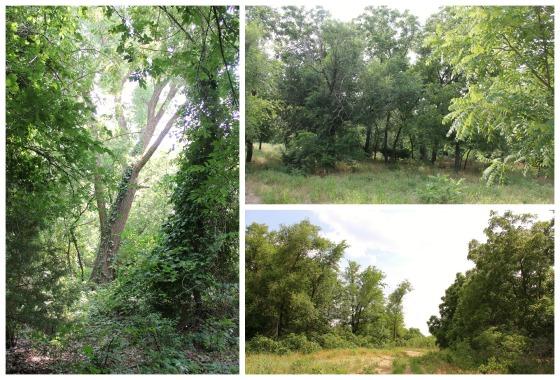 Land Collage 2