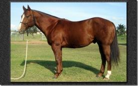 horse-photo-mac