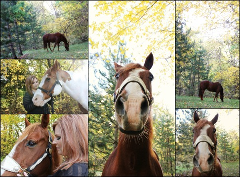 Horse collage 2