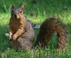 home_page_squirrel2