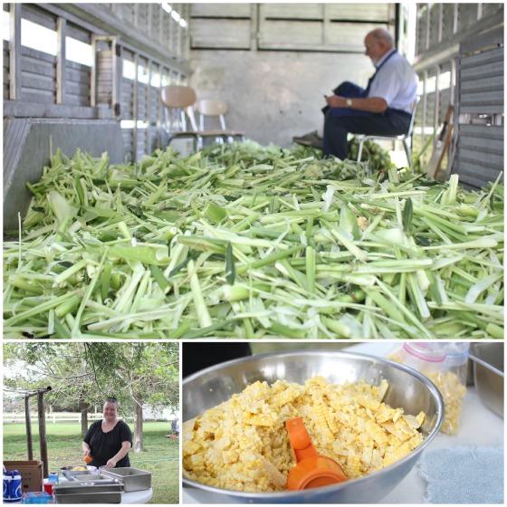 corn day 10