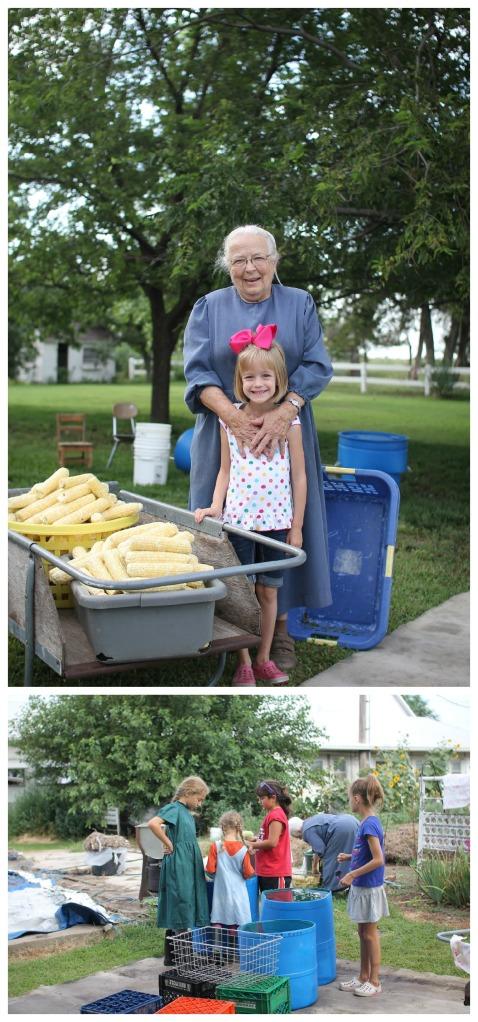 corn day 5