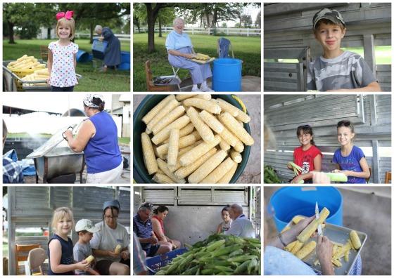 corn day 6