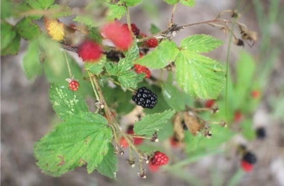 berry screen shot